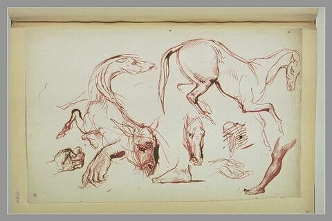 Etudes de chevaux, de pieds et de mains