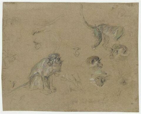 Etudes d'après un singe