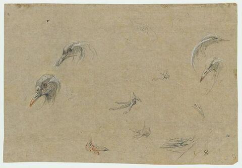 Têtes d'oiseau, plumage et pattes
