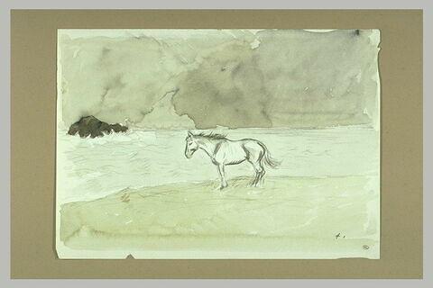 Cheval sur le bord de la mer