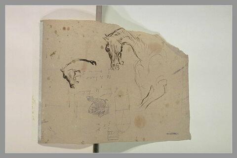 Etudes de tête de cheval tournée vers la gauche ; main