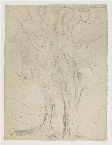 Des arbres de la Villa Borghèse, à Rome
