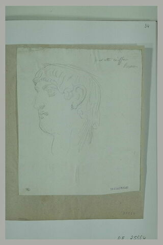 Tête d'après l'antique, de profil, à gauche