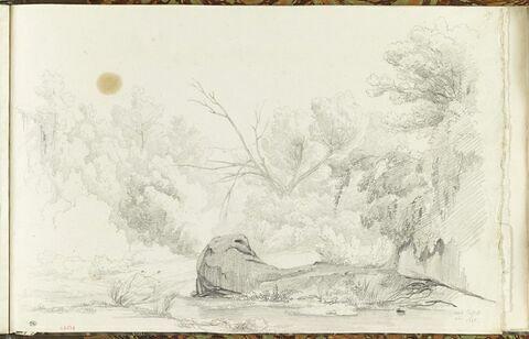 Civita Castellana : rivière au milieu des arbres