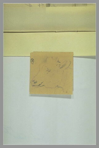 Tête de veau, profil à gauche