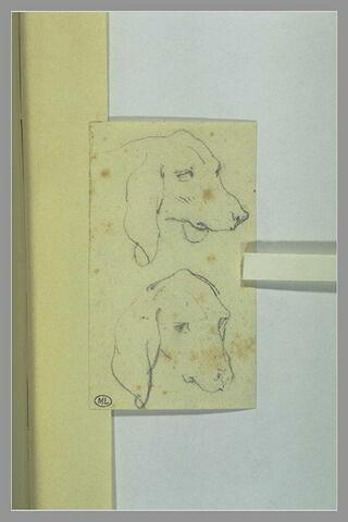 Deux têtes de chien à longues oreilles