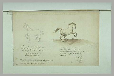 Cheval tourné vers la gauche ; cheval tourné vers la droite
