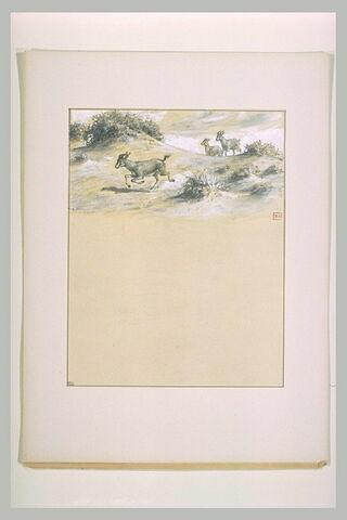 Gazelles s'enfuyant dans un paysage avec quelques touffes de verdure