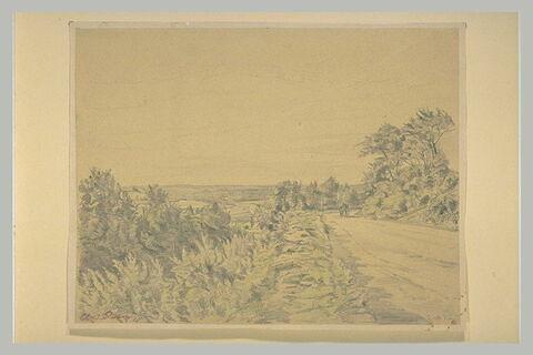 Paysage panoramique avec une route bordée d'arbres