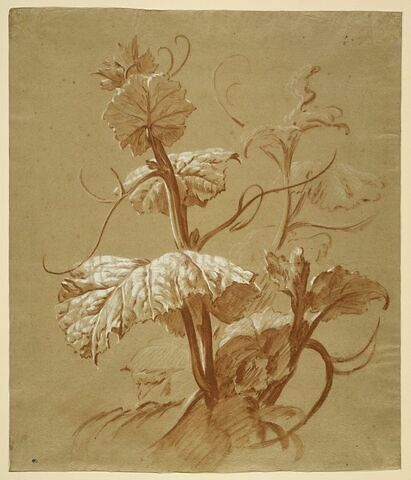 Etude de plante