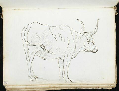 Vache vue de profil