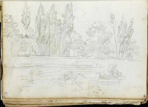 Paysage avec ligne d'arbres