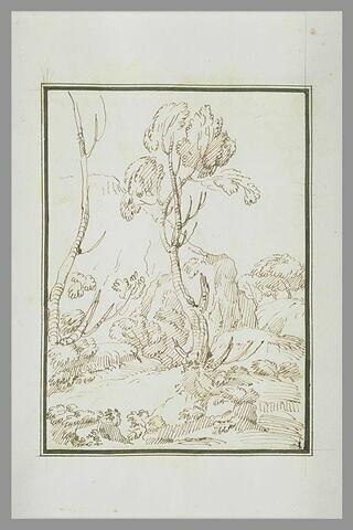 Paysage de rochers couverts d'arbres secs