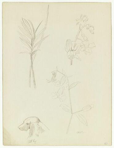 Deux fleurs, feuillages et une tête de chien