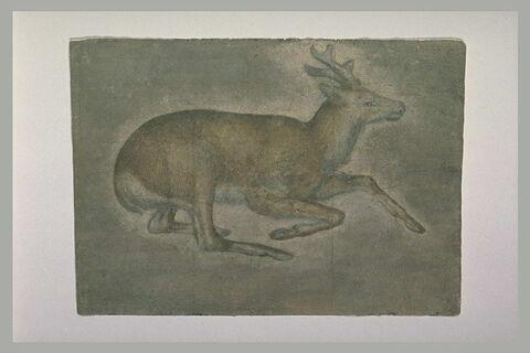 Etude d'un jeune cerf couché, de profil, vers la droite