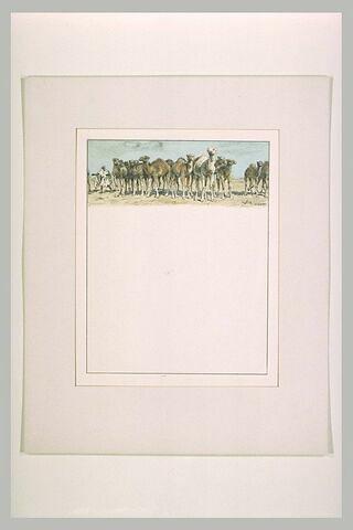 Antar sépare mille chamelles du troupeau de Mounzir pour se les approprier