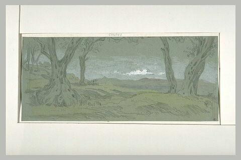 Corfou, paysage aux oliviers