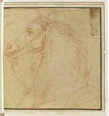 Tête et encolure de cheval, de profil