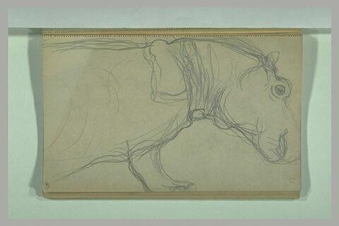 Avant-train et tête d'un hippopotame