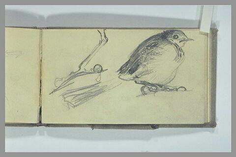 Oiseau ; patte d'oiseau