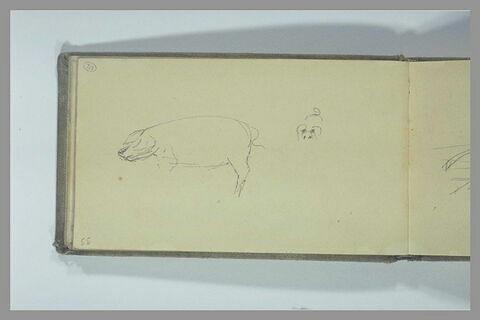 Porc vu de profil ; oreilles, yeux et queue d'un porc