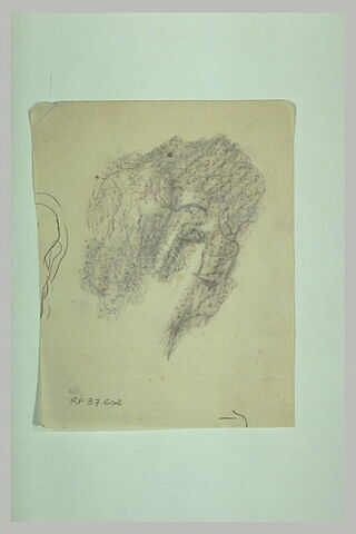 Fragment de chevelure (?)