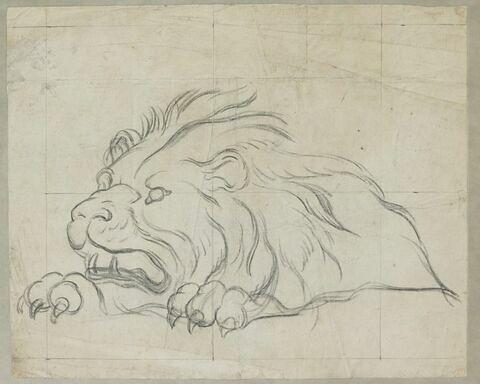 Lion menaçant