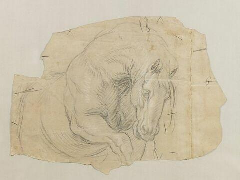 Etude partielle de cheval, la tête baissée