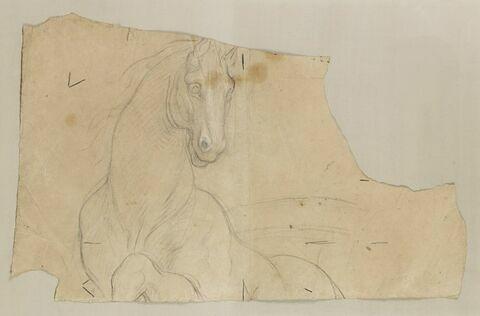 Etude partielle de cheval, la tête dressée