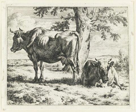 Les deux vaches au pied d'un arbre