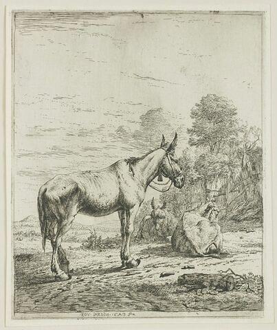 Le mulet aux clochettes
