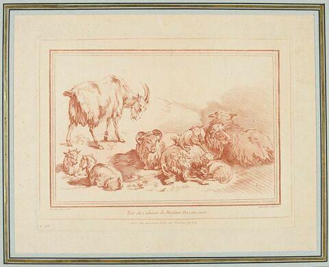 Chèvre, chevreaux et moutons