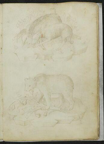 Chiens attaquant un sanglier et ours mangeant des fruits