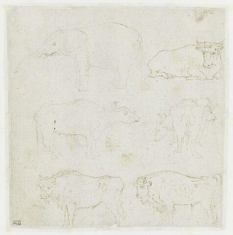 Six études d'animaux, dont un éléphant, un taureau et deux bisons