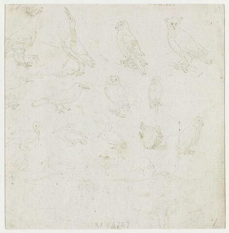 Dix-huit études d'oiseaux, dont quatre sortes de chouettes