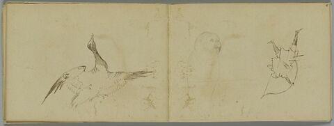 Canard volant, ailes déployées