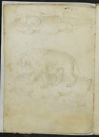 Lapin sur un tertre et lion