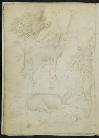 Cerf et une biche dans un paysage