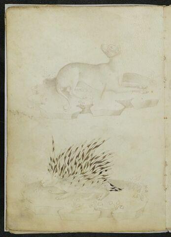 Le même chien muselé inversé et porc-épic