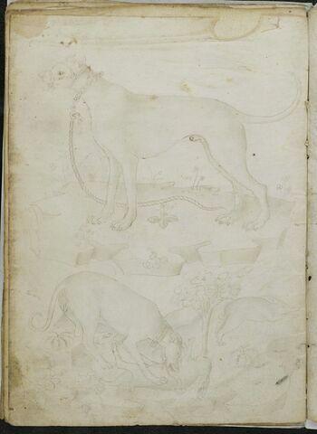 Chien avec une laisse de profil et chien attaquant un lapin, un autre lapin prend la fuite (idem recto, mais inversé)