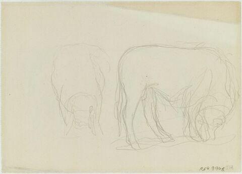 Croquis d'un taureau de face et de profil