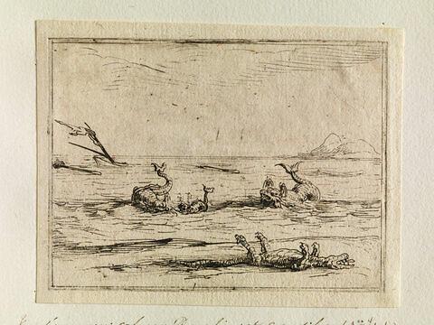 Vue d'une mer calme : Dauphins et crocodiles