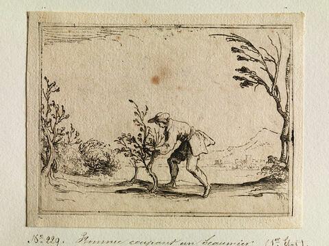 Homme coupant un baumier