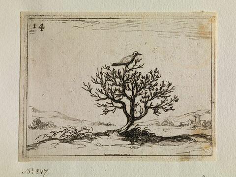 Le rossignol posé sur un buisson