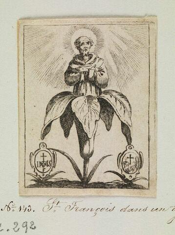 Saint François dans un lys
