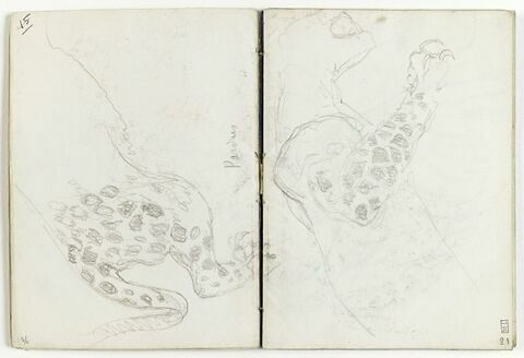 Etude d'avant-train de léopard