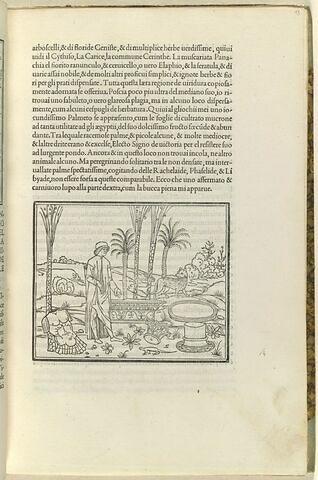 Poliphile parmi des restes antiques