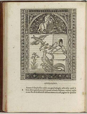 Fable du faucon et des pigeons