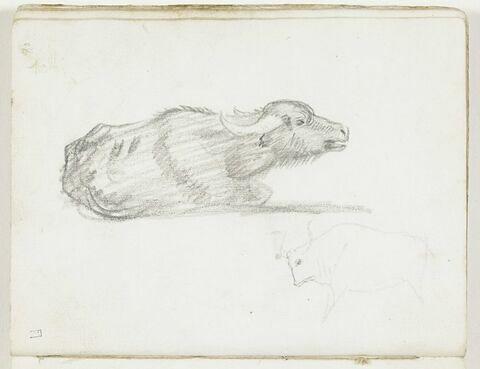 Buffle allongé, de profil vers la droite ; esquisse d'un taureau, de profil vers la gauche