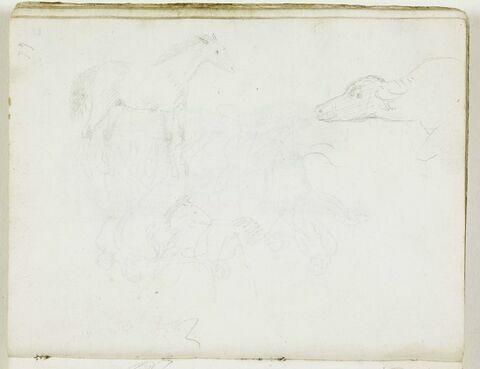 Deux esquisses de cheval, de trois quarts vers la droite, et une d'une tête de buffle, de profil vers la gauche